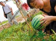 上海农家乐一日游 烧烤钓鱼钓龙虾 采摘草莓西瓜 吃土菜
