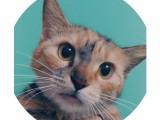 南山西丽流浪猫领养