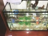 鱼缸50 25 30厘米长宽高