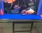自己用的鱼缸出售