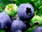 蓝莓采摘门票25元