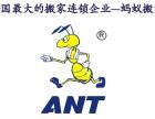 金山朱泾蚂蚁搬家 朱泾镇蚂蚁搬家电话 上海蚂蚁搬家公司
