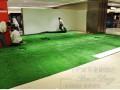 北京塑料草坪哪里卖价格