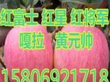 山东红富士苹果价格--,9M