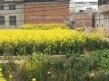 唐集中学附近 9间地皮出售 300平米