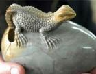 动物奇石交易找正规公司