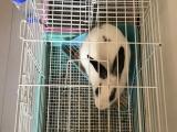 一公一母兔兔找新家了