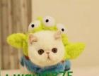 可爱猫咪找主人哦~自家养的猫生的宝宝哦~