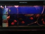 日胜1.5品牌鱼缸出售个人