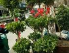 合肥市滨湖新区徽州大道紫云路云谷路实体鲜花店开业开张花篮植物