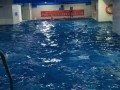 淡水室内恒温游泳池,少儿游泳班培训,可免费体验