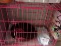 粉色的狗笼子便宜卖