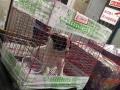 济南机场宠物单独托运
