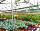 东莞研学亲子游农业科普生态之旅让孩子全面发展