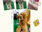 专业宠物美容与护理