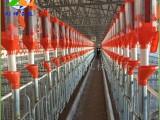 猪用料线生产 养母猪定位栏料线产床料线 自动饲喂设备省时省力
