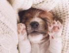 宠物知识狗狗多久洗一次澡