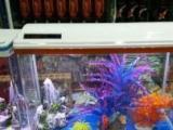 乌市,全新小鱼缸,批发零售,免费送货上门安装