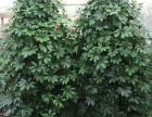 植物花卉租赁,庭院花园设计,公司绿化养护,屋顶花园