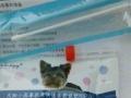 批发犬瘟试纸细心试纸冠状试纸猫瘟试纸宠物药品等