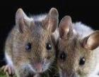 22年高效灭鼠蟑螂白蚁 政府注册 三千企业选择