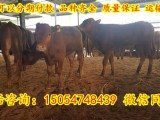 郑州哪里有卖肉牛的地方