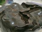 各种金、铜三足香炉底座,包浆浓厚
