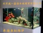 清洗鱼缸 清理鱼缸调理水质 维护鱼缸海水鱼缸护理