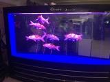 中国鱼缸第一品牌可丽爱鱼缸代理,新加坡仟湖龙鱼销售
