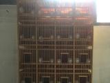 画眉鸟排笼20格一组装让用过一次