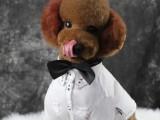 派多格寵物美容培訓學校 專業培訓指導