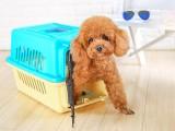 杭州宠物托运一体的活体托运公司