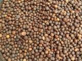 茶叶籽 茶叶种子 茶树种子 茶油原料厂家批发