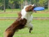 武汉硚口宠物定点大小便训练