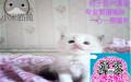 小米猫苑繁殖精品布偶猫 签协议包健康纯种