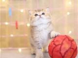 猫舍 现货出售 全国包邮 本地送货上门