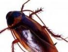 贵州政府灭四害,灭老鼠、蟑螂、白蚁、苍蝇、蚊子