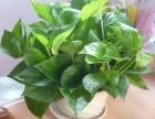 重慶植物租賃,銷售,假山 植物墻 仿真植物墻設計施工