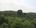 船山大道上180亩庄园出租,绿化面积80%