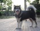作为一个爱狗人士,关于汪星人的故事,你要懂得