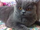 无情冷面蓝猫,静若处子动如脱兔,等你来购!