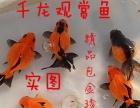 扬州 千龙观赏鱼养殖场