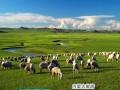 昆明到内蒙古:希拉穆仁大草原银肯响沙湾成吉思汗陵双飞5日游