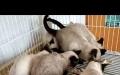 专业繁殖各种品种猫咪