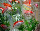 出售观赏鱼 快速送货上门 鱼缸消毒清洗 鱼缸造景设计