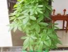 深圳光明新区绿化养护