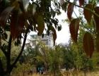 澄江抚仙湖孤山风景区 住宅底商 580平米