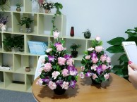 深圳学习花艺插花去哪个学校好