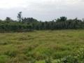 泸县1100亩苗圃土地需求合作,农庄、林下、鱼塘