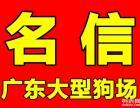 广州哪里有卖宠物狗 广州宠物狗买卖